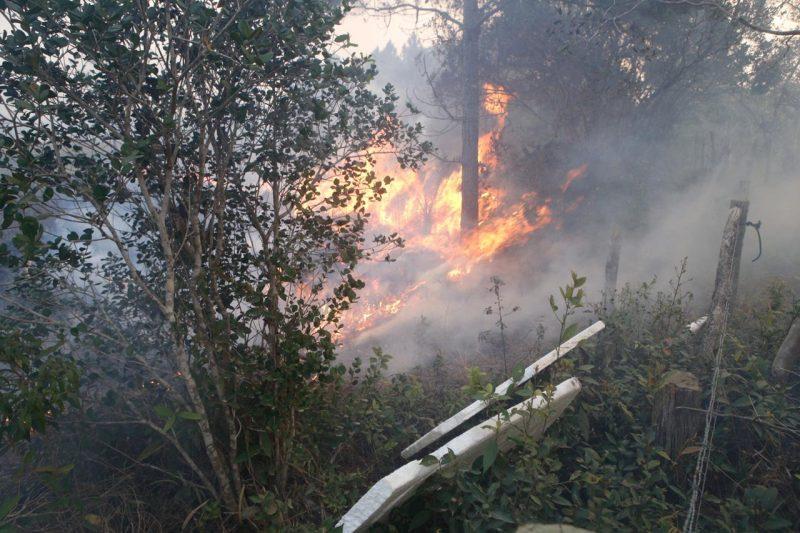 O fogo já consumiu mais de 500 hectares de vegetação - Flávio Tin/ND
