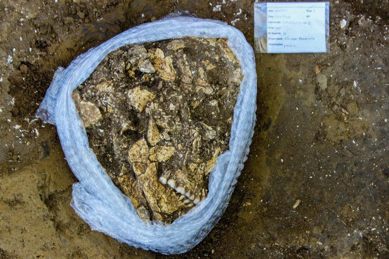 A mulher foi sepultada em cova rasa, deitada de lado e com as pernas e braços parcialmente dobrados - Espaço Arqueologia/Divulgação/ND