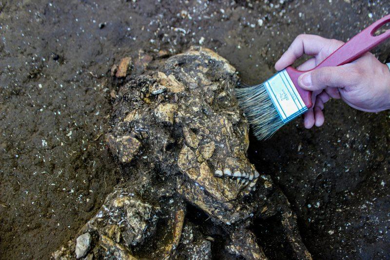Novas conclusões sobre o modo de vida das populações que viviam no Vale do Itajaí há milhares de anos - Espaço Arqueologia/Divulgação/ND