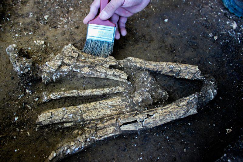 Após análise dos ossos foi possível constatar que, no primeiro momento do ritual, pigmentos vermelhos de origem mineral ferroso, popularmente conhecido como ocre, foi pulverizado sobre o corpo. - Espaço Arqueologia/Divulgação/ND