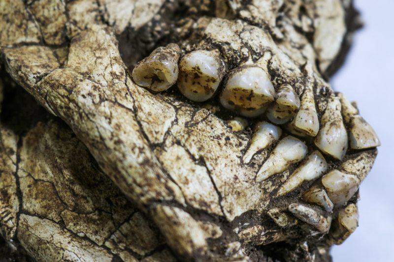Foram encontrados dois esqueletos humanos, ossos de animais e fogueiras. - Espaço Arqueologia/Divulgação/ND