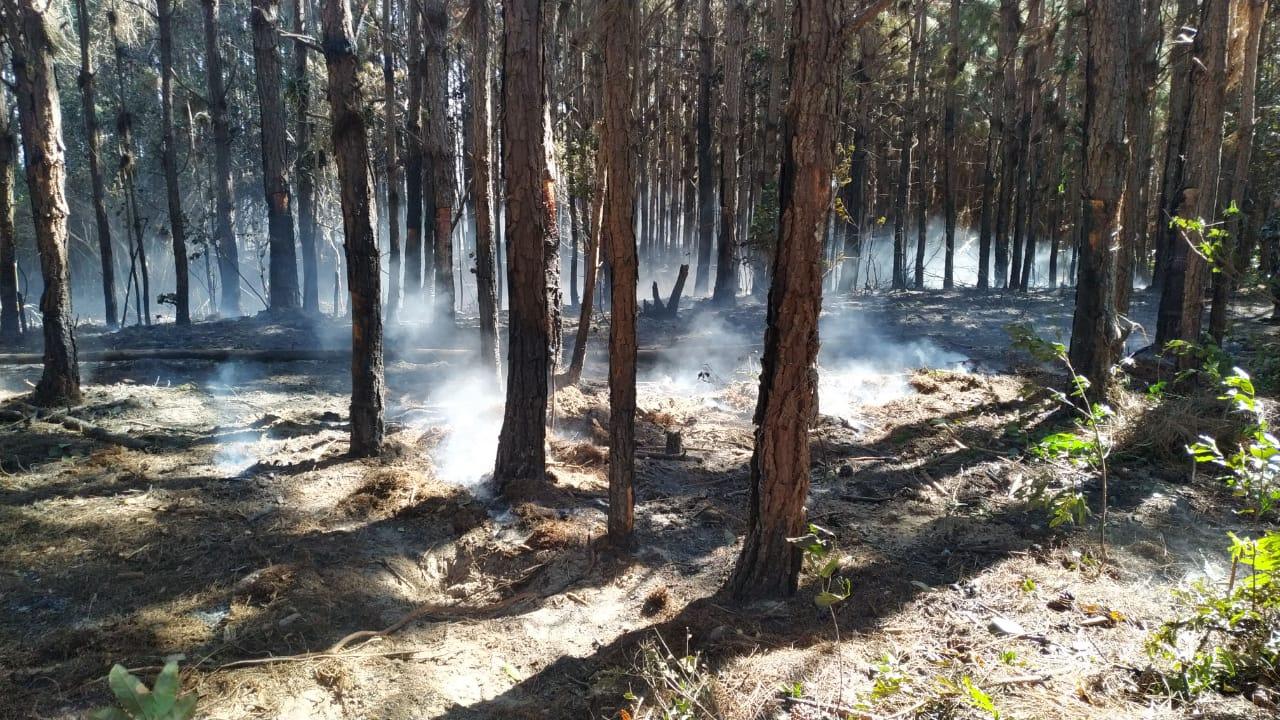 As áreas atingidas pelo fogo são as mais variadas possíveis - Polícia Militar Ambiental/Divulgação