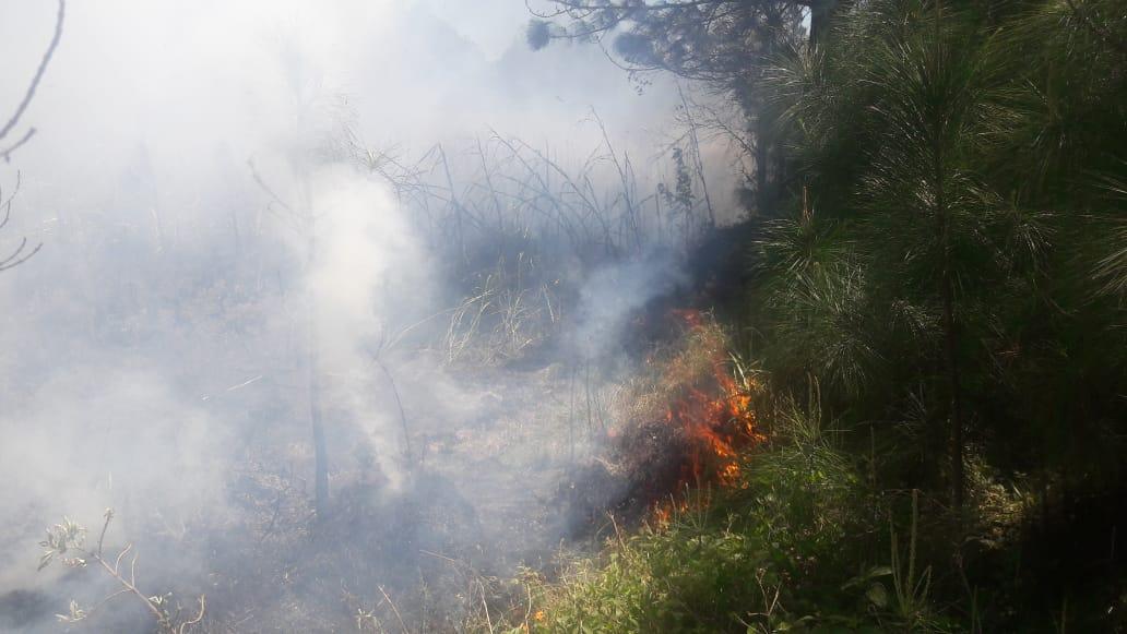 O incêndio mais recente, deste domingo, na região da Praia do Sonho – próximo à rua do Capim - , e também na região de Morretes que é uma área de reflorestamento - Polícia Ambiental/Divulgação/ND