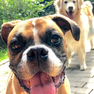 Cães e gatos são considerados seres sencientes em São José – Foto: Flávio Tin/ND