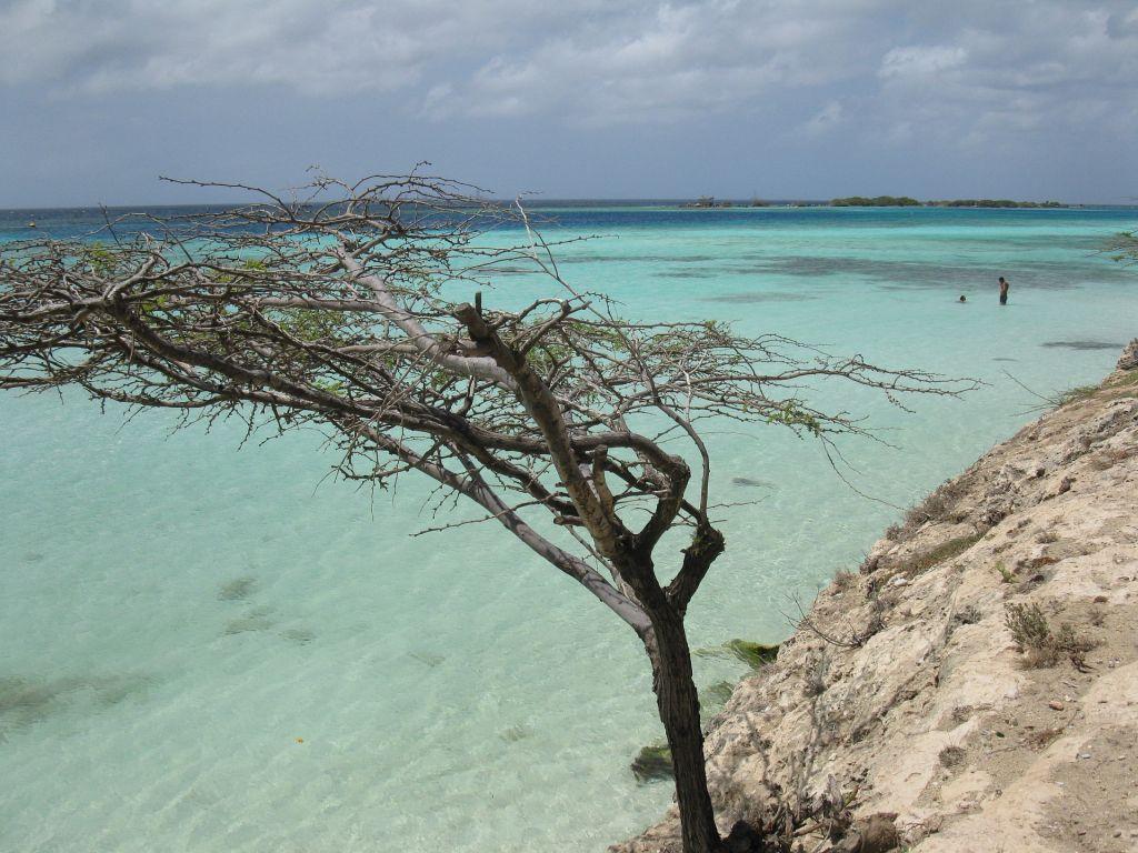 Aruba - Aruba é uma ilha localizada no Caribe, próxima a Venezuela. O local é conhecido por flamingos que rodeiam a orla das praias - Pixabay - Pixabay /Rota de Férias/ND