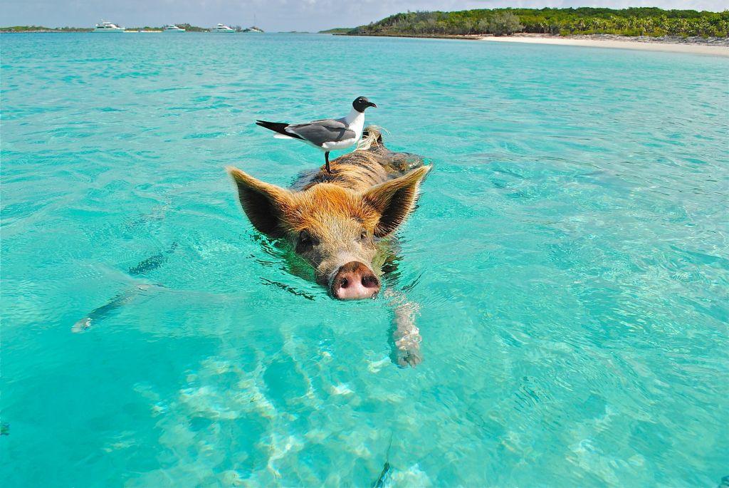 Melhores lugares para ver animais na natureza - - /Rota de Férias/ND