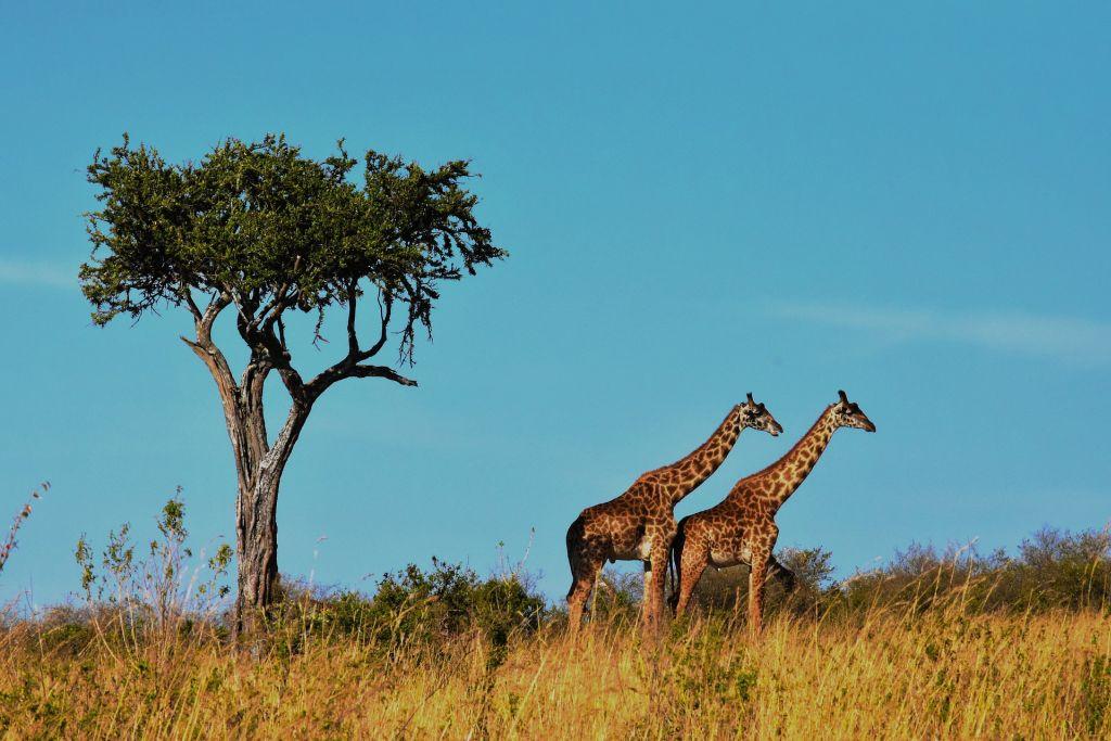 Parque Nacional Serengeti, Tanzânia - Pixabay - Pixabay /Rota de Férias/ND