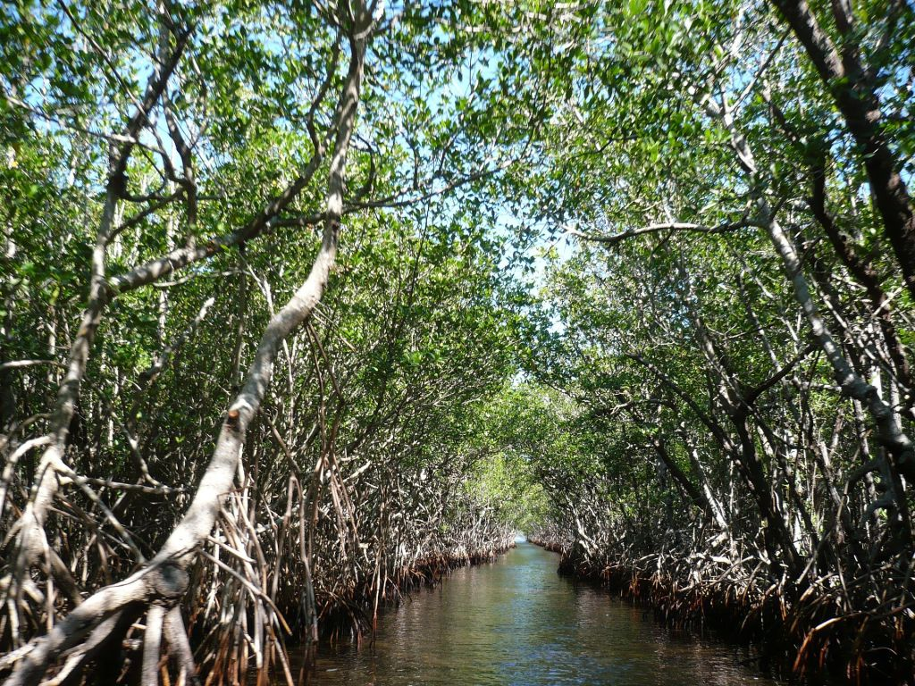 Parque Nacional dos Everglades, EUA - Este parque é o lar do famoso crocodilo americano. Para conhecer esta reserva, o ideal é participar de excursões - Pixabay - Pixabay/Rota de Férias/ND