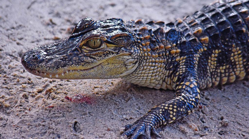 Parque Nacional dos Everglades, EUA - Pixabay - Pixabay /Rota de Férias/ND