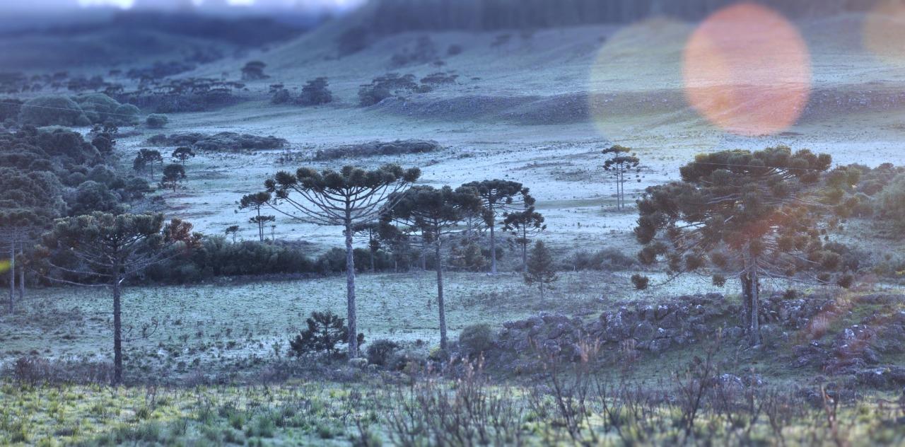 A foto, tirada às 5h da manhã, no Vale do Caminho da Neve, mostra um tapete branco sobre a vegetação. - Mycchel Legnaghi/Divulgação/ND