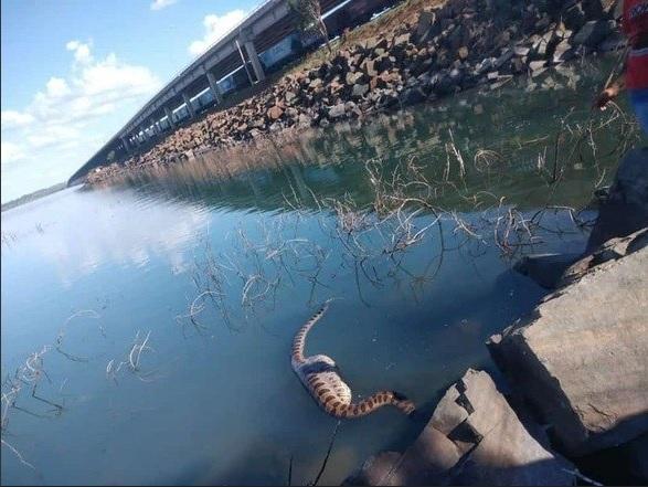 Uma sucuri de cerca de 5 metros de comprimento foi flagrada no rio Paraná em Aparecida do Taboado, no Mato Grosso do Sul, a 450 quilômetros da capital Campo Grande. - Reprodução/Facebook