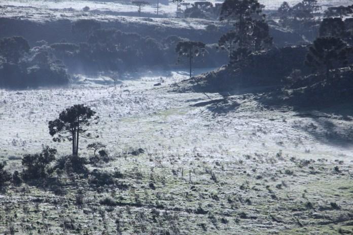 Em Fraiburgo, termômetros marcaram 5,9 ºC na manhã deste sábado - Mycchel Legnaghi/São Joaquim Online/Divulgação/ND