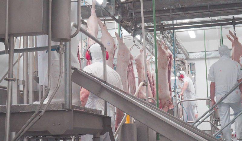 Neste ano, a exportação de carne suíne teve o maior faturamento em 22 anos em<br />Santa Catarina