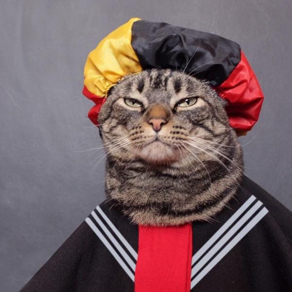 """Conheça os animais mais famosos da internet / Chico - Protagonista do perfil """"Cansei de ser gato"""", o felino da cidade de São Paulo foi abandonado e encontrado pela dona, que o acolheu. Rodeado de amor e carinho, Chico decidiu que poderia ser tudo o que ele quisesse. Daí nasceu a brincadeira: se fantasiar de personagens, atores e memes do cinema e da internet. A página já tem mais de 400 mil curtidas. Veja mais: https://goo.gl/mVRgrc - Crédito: reprodução da internet/33Giga/ND"""