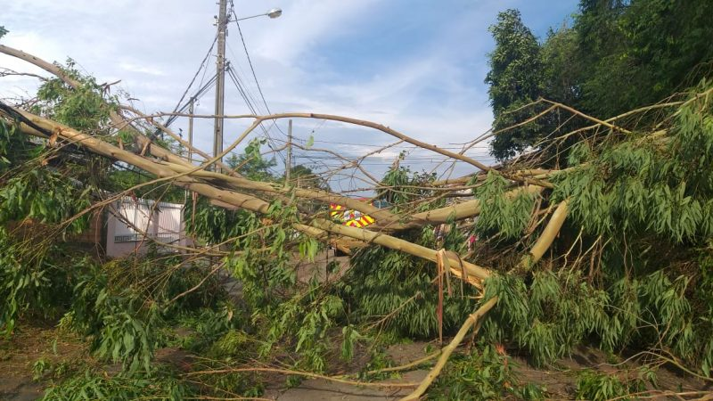 Bombeiros Voluntários e Defesa Civil trabalharam na remoção de cinco árvores - Bombeiros Voluntários de Indaial