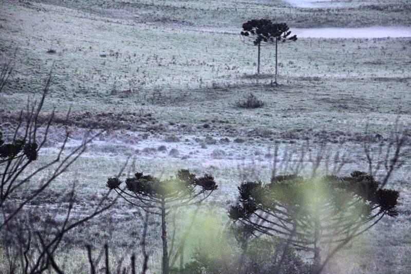 Os moradores de São Joaquim tiveram que dormir enrolados nas cobertas e acordar agasalhados neste início de dezembro - Mycchel Hudsonn Legnaghi/São Joaquim Online/Divulgação/ND