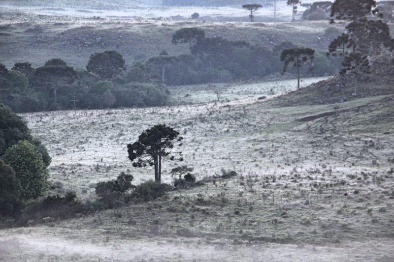 Nesta sexta-feira (6) foi registrado a segunda geada apenas no mês de dezembro, em São Joaquim, na Serra Catarinense - Mycchel Legnaghi/São Joaquim Online/Divulgação/ND
