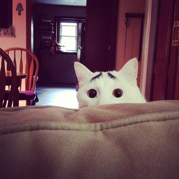 Sam - Com dois montinhos de pelos que lembram muito um par de sobrancelhas, Sam aparenta estar sempre surpreso. Astro na internet, o gato tem milhares de seguidores fieis em sua conta no Instagram (@samhaseyebrows). Veja mais: https://goo.gl/L5JQJH - Crédito: reprodução da internet/33Giga/ND