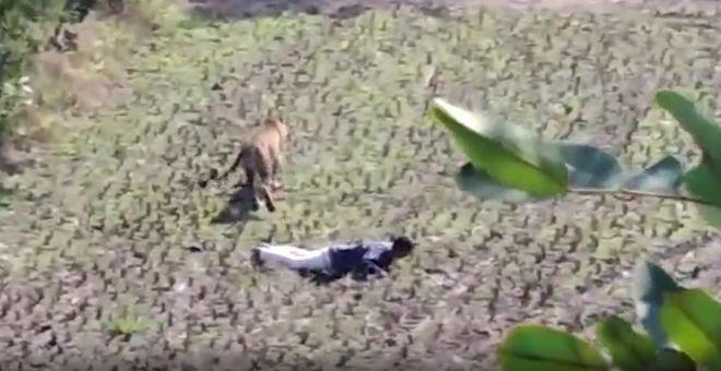 Nas últimas semanas, a Índia está presenciando uma série de ataques de animais selvagens. No norte do país, ao menos duas pessoas morreram após uma série de ataques de leopardos. - Reprodução/Vídeo/Daily Mail