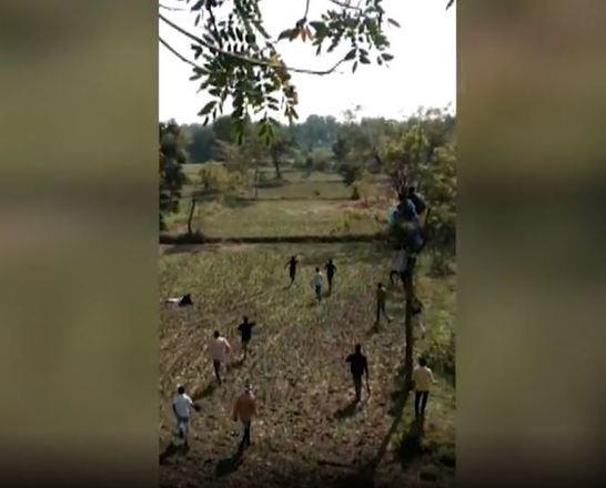 Segundo informações, há um parque com tigres em um local próximo. Como aponta o Daily Mail, o Parque Nacional Pench fica a 100 km de distância do local do ataque, mas não está claro que o animal saiu de lá - Reprodução/Vídeo/Daily Mail