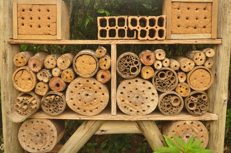 As abelhas podem escolher entre diversos aposentos – Foto: Gabriel Lain/ND
