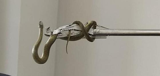 Cobra foi encontrada em agência bancária do Centro Histórico – Foto: Bombeiros Voluntários