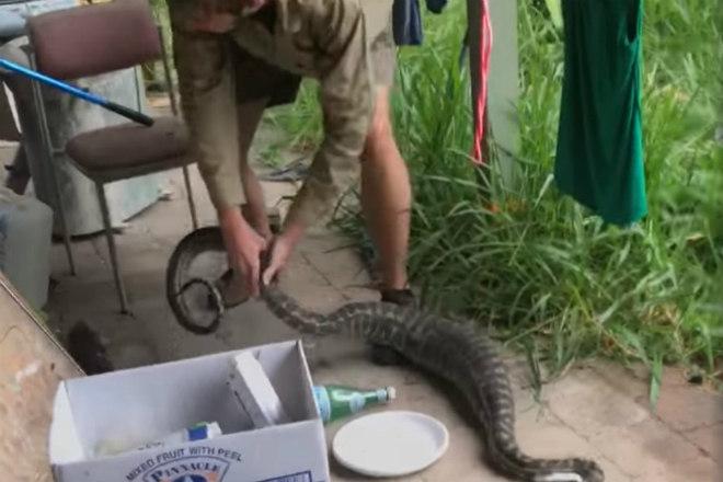 Já a serpente gulosa foi colocada em um saco e devolvida à natureza - Portal R7/Reprodução/yenisafak.com/ND