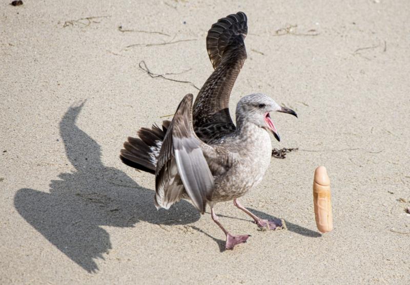 """""""Antes de perceber o que era o objeto, estava irritada porque a poluição plástica é um problema sério, e como fotógrafa conservacionista estou documentando os impactos humanos na vida selvagem"""", disse Jennifer ao portal Gizmodo. - Jennifer Warner / Reprodução"""