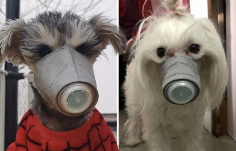 Na China, já se pode ver cães usando máscara – Foto: Reprodução