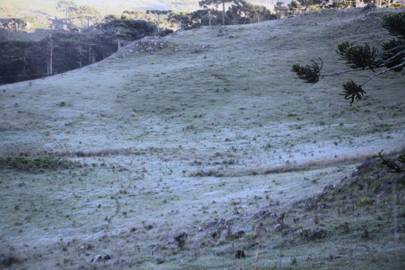 As fotos dessa galeria foram registradas em um trecho da rota Vale Caminhos da Neve, no Vale do Santo Antão. A região fica a 2 quilômetros do centro de São Joaquim. O nome já diz bastante coisa: o local é um dos mais frios de Santa Catarina - Mycchel Legnaghi/São Joaquim Online