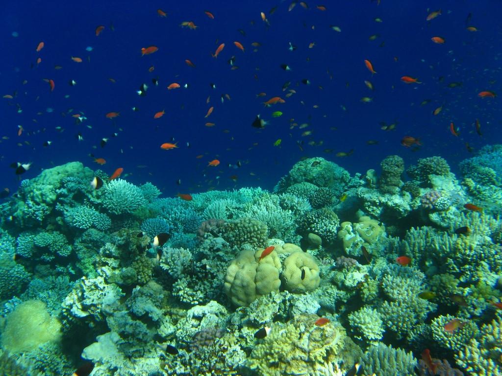 Egito: famoso pelas citações bíblicas, o Mar Vermelho recebe diversos mergulhadores por ano - Pixabay - Pixabay/Rota de Férias/ND