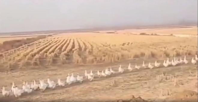 Na ocasião da infestação, segundo informações da agência estatal chinesa CGTN, a nuvem gigantesca de insetos estava indo para o território chinês através da fronteira entre Índia e Paquistão - Portal R7/Reprodução/Vídeo/Btime.com/ND