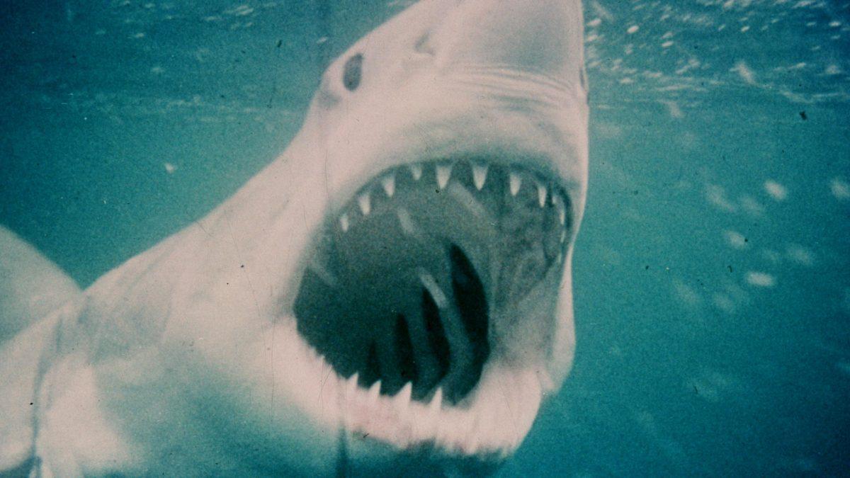 10/04 – Tubarão (1975) - Crédito: Divulgação/33Giga/ND