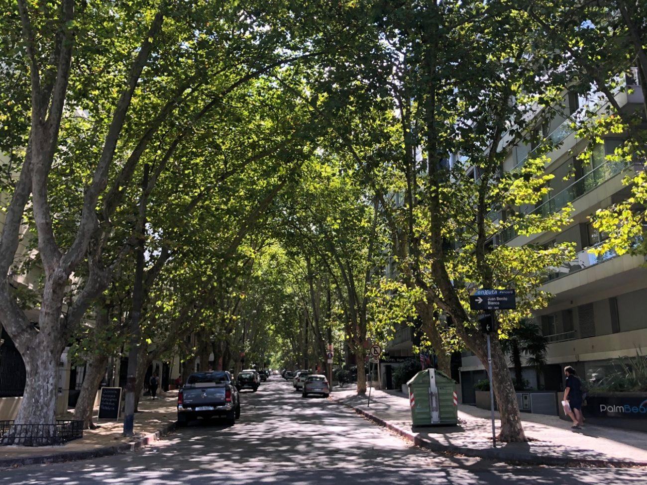 Rua arborizada de Montevidéu - Heloisa Dallanhol/Divulgação/ND