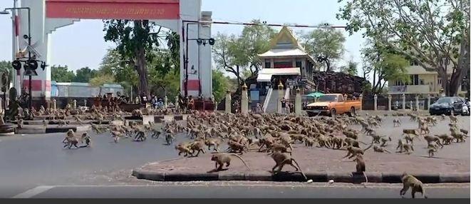 A região de Lopburi, na Tailândia, presenciou a revolta dos símios com um cena chocante: gangues rivais com centenas de macacos protagonizaram uma batalha campal no centro do país. - Reprodução/Vídeo/Daily Mail