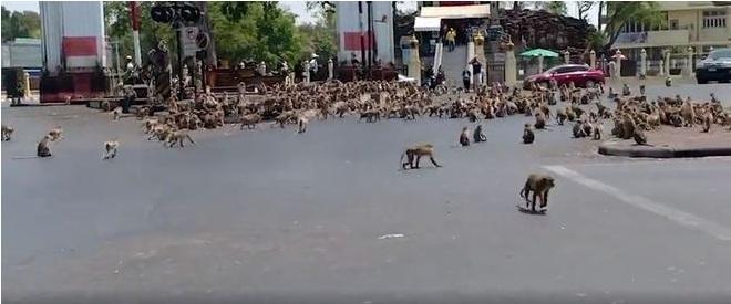 E o monte de macacos era alimentado justamente por turistas mão aberta. - Reprodução/Vídeo/Daily Mail
