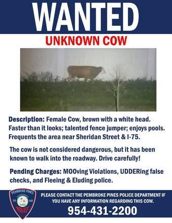 Polícia de Pembroke Pines fez cartaz de procurado para vaca fugitiva – Foto: Reprodução/Twitter/@PPinesPD