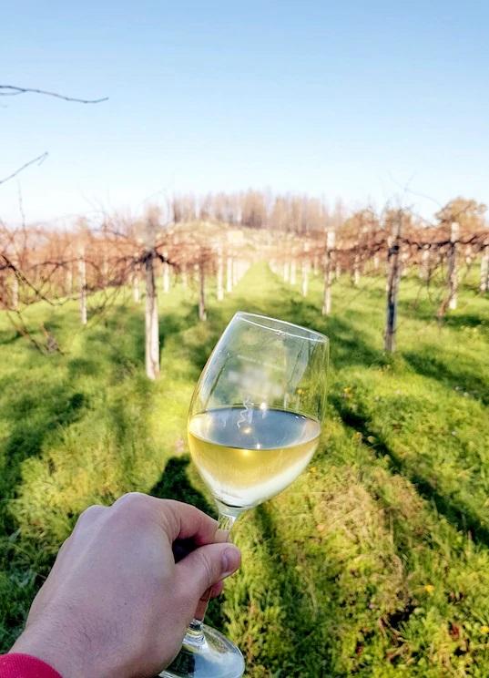 Aula de vinhos com um especialista (https://bit.ly/2Vp7oHO) – Preço: a partir de R$ 77 por pessoa - Crédito: Divulgação/33Giga/ND