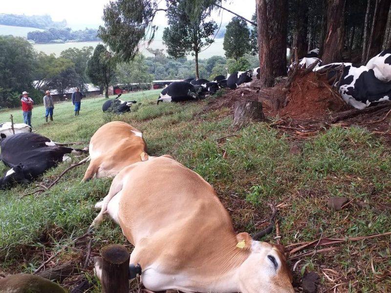 Dos 30 animais da propriedade, 16 morreram – Foto: Reprodução/ND