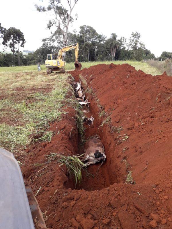 Vacas foram enterradas com auxílio de máquina da prefeitura – Foto: Felipe Tacca/ND