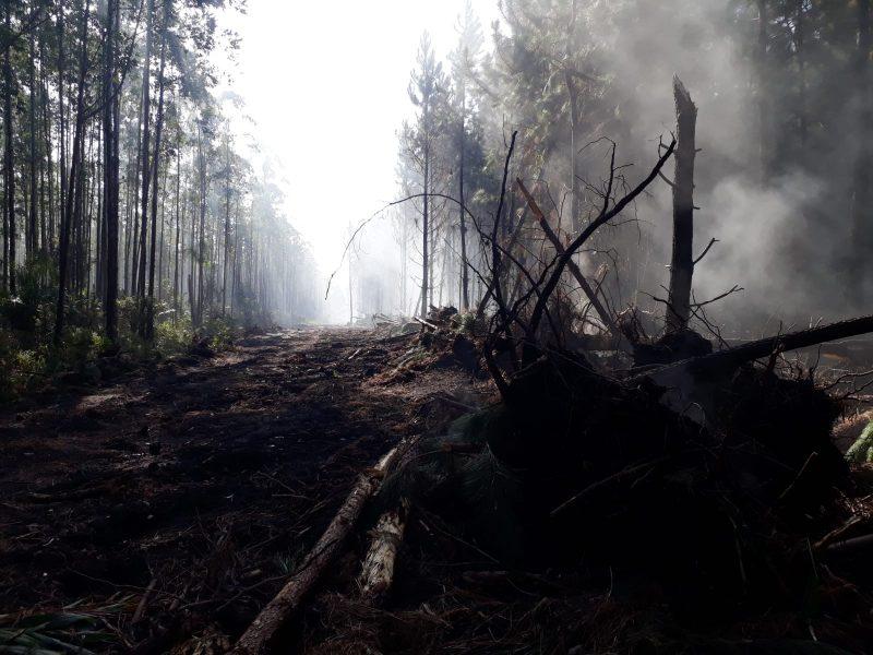 Em Barra Velha, foram criados aceiros para evitar a propagação das chamas – Foto: Corpo de Bombeiros Militares/Divulgação