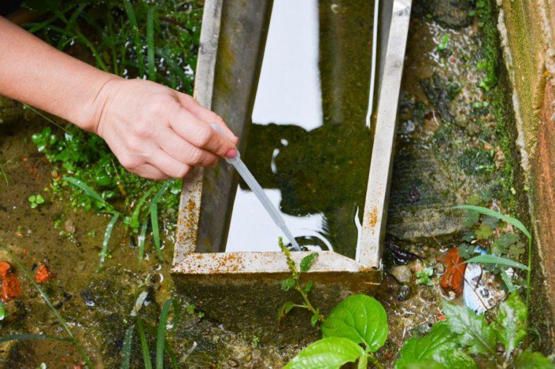 Estado registra aumento de focos do mosquito Aedes aegypti em janeiro – Foto: Secom/Divulgação/ND