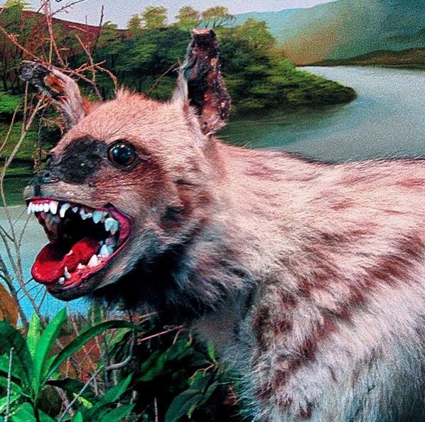 @craptaxidermy (www.instagram.com/craptaxidermy): Taxidermia é o nome dado à técnica que faz empalhamento de animais. Por padrão, isso não é uma coisa que dá muito certo. Tanto é que o perfil Crap Taxidermy reúne imagens bizarras de trabalhos ao redor do mundo. Às vezes, fica até difícil identificar o bichinho. - Crédito: Reprodução/Instagram/33Giga/ND