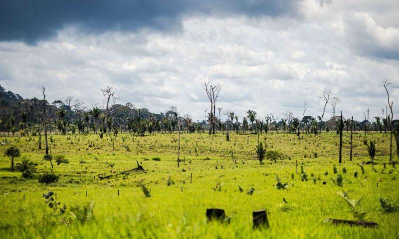 Colniza, MT, Brasil: Área degradada no município de Colniza, noroeste do Mato Grosso. – Foto: Marcelo Camargo/Agência Brasil/ND