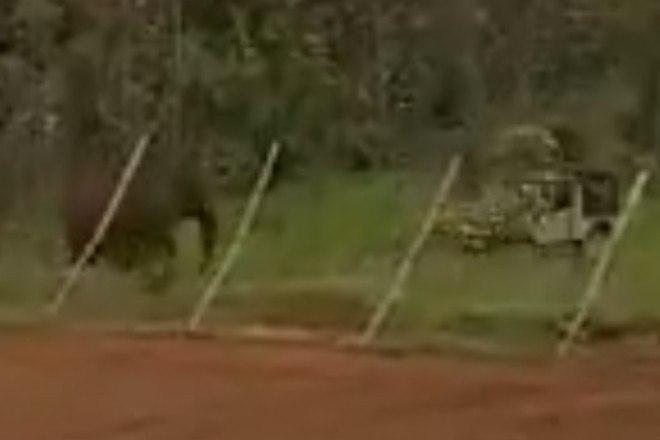 No registro, o elefante se aproximou perigosamente do veículo - Reprodução/Twitter/Susanta Nanda IFS