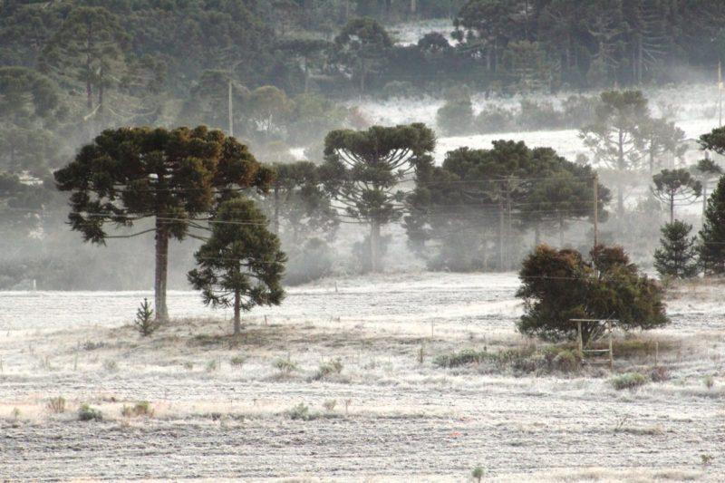 Os campos de Urupema também amanheceram cobertos de gelo. Conforme o levantamento dos meteorologistas Ronaldo Coutinho e Piter Scheuer, dez municípios tiveram temperaturas negativas no Estado - Marleno Muniz Farias