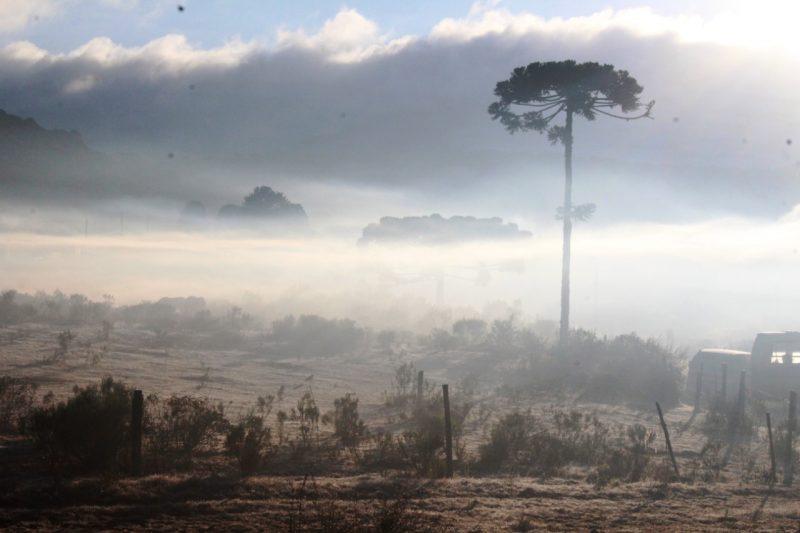 Outro local atingido pela forte geada foi o município de Urupema, que segundo o Epagri/Ciram, registrou -4,6°C - Marleno Muniz Farias