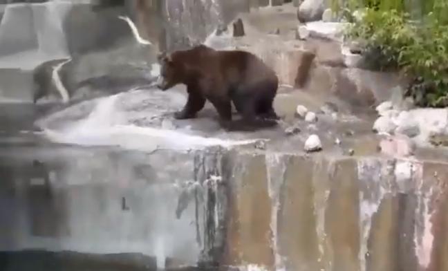 Urso sofreu uma crise de estresse – Foto: Reprodução Youtube