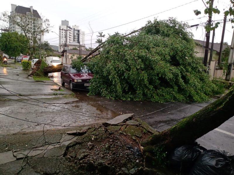 A força do vento arrancou árvores em todas as regiões. - Redes Sociais/ND