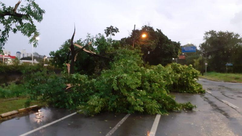 Árvores foram arrancadas e caíram sobre a pista na avenida Beira Rio, no Centro da cidade - Gladionor Ramos/NDTV
